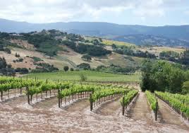 larner vineyard picture